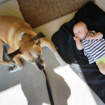 Dog and baby laying beside each other