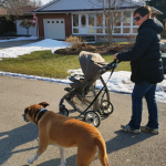 Walking a dog while pushing a stroller