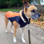 Ezydog Element Jacket